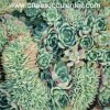 Echeveria pumila form. cristata