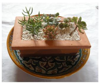 R alisez votre composition de succulentes le blog arr e - Composition plantes grasses interieur ...