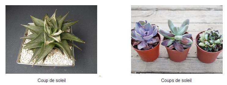 entretien des plantes grasses pour les experts le blog arr e succulentes. Black Bedroom Furniture Sets. Home Design Ideas