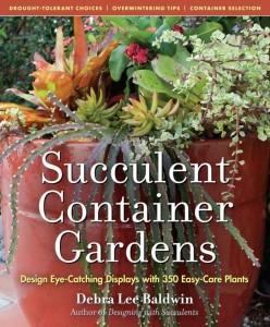 succulent-container-gardens