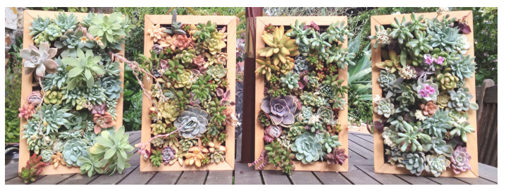 les tableaux de succulentes le blog arr e succulentes. Black Bedroom Furniture Sets. Home Design Ideas